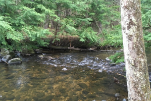Woods and stream